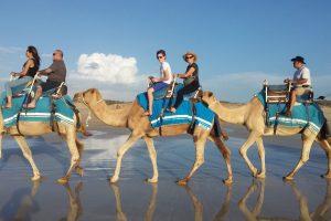 camel-1643857_1920